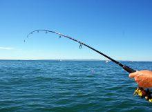Furuno Fish Finder Reviews